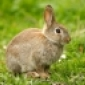 David Wilson's Rabbit's picture